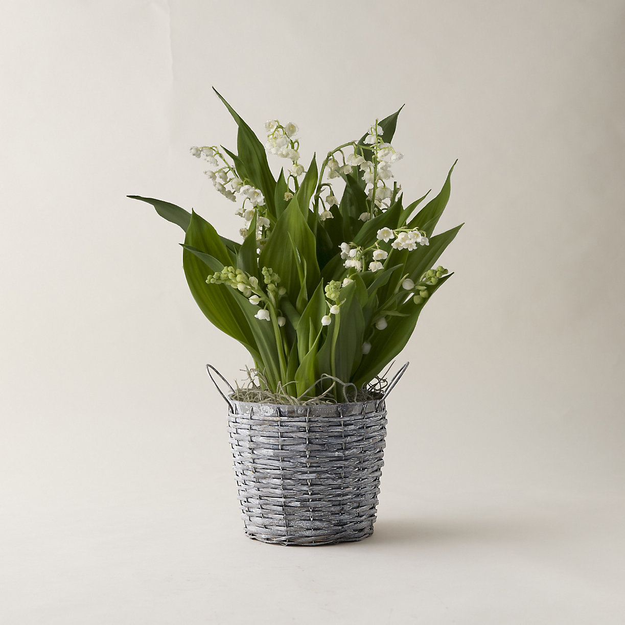 Lily of the Valley, Woven Metal Pot