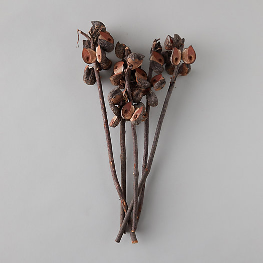 View larger image of Dried Hakea Bunch