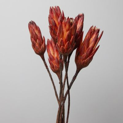 Preserved Repens Bunch, Red