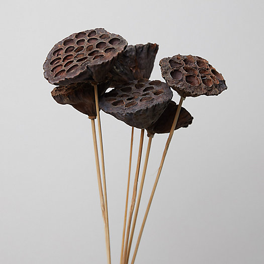 View larger image of Dried Lotus Pod Bunch