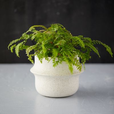 Banded Ceramic Pot