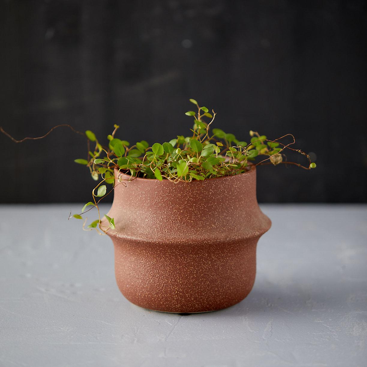 Banded Ceramic Pot