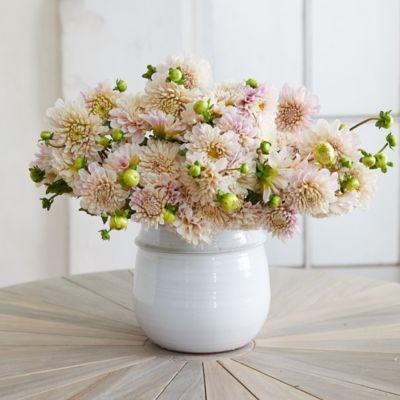 Fresh Creme Dahlia Bouquet