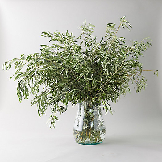 View larger image of Fresh Olive Branch Bunch