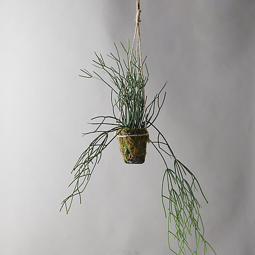 View larger image of Faux Potted Rhipsalis
