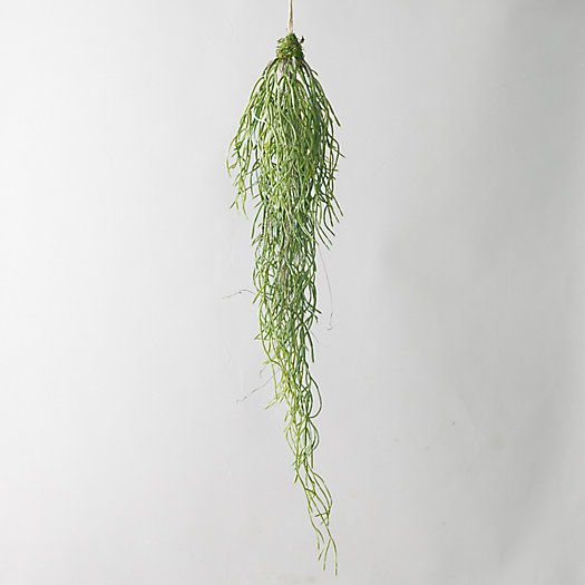 View larger image of Faux Rhipsalis Plant