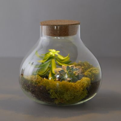 LED Top Terrarium
