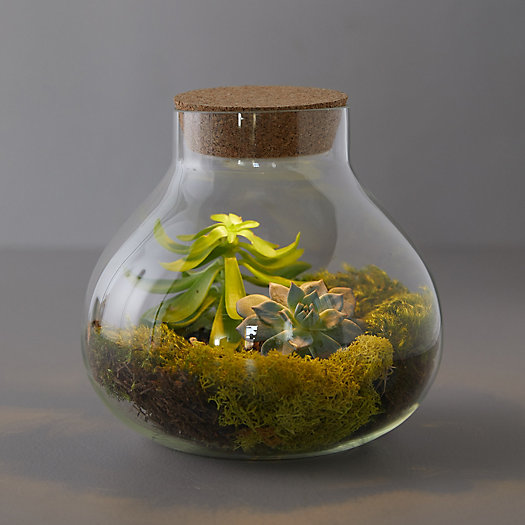 View larger image of LED Top Terrarium