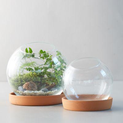 Sphere Terrarium, Clay Base