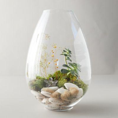 Raindrop Glass Terrarium