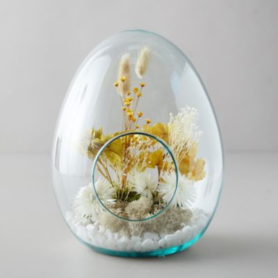 Open Egg Terrarium