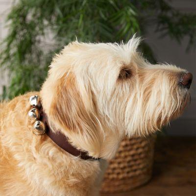 Jingle Bell Pet Collar