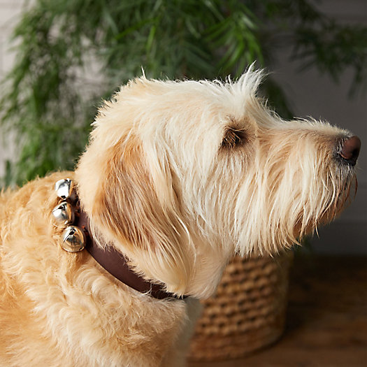 View larger image of Jingle Bell Pet Collar
