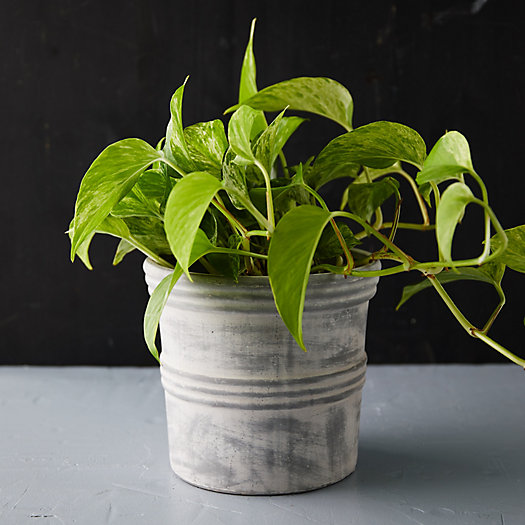 View larger image of Double Ridged Jar Planter