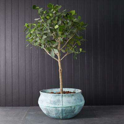 Fiberglass Bell Jar Planter
