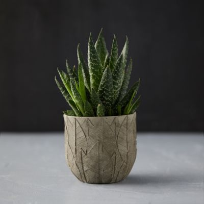 Leaf Imprint Pot