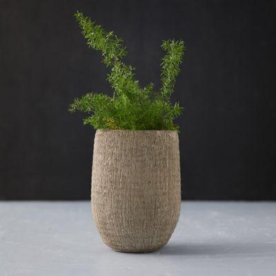 Cement Textured Pot, Tall