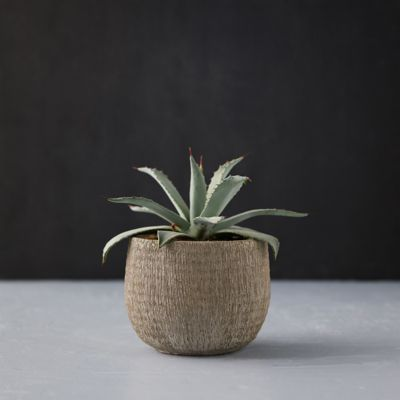 Textured Cement Pot