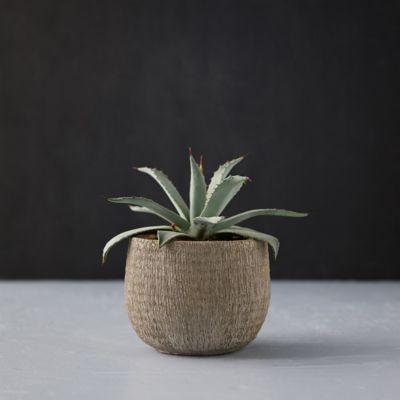 Textured Cement Pot