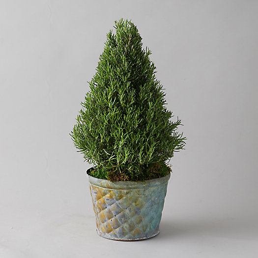 View larger image of Rosemary Tree, Geo Metal Pot