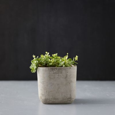 Smooth Cement Pot, Tall