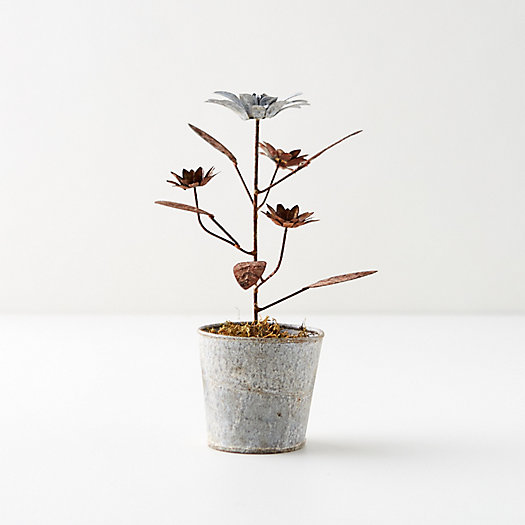 View larger image of Aged Iron Potted Daisies, Silver + Copper