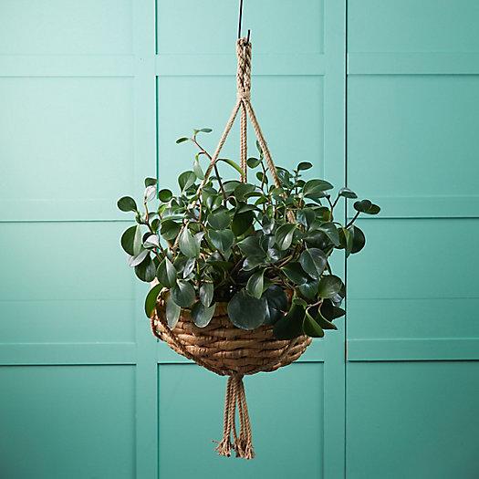 View larger image of Water Hyacinth Hanging Basket