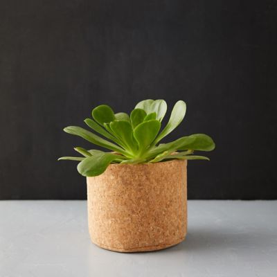 Cork Pot