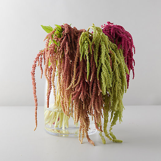 View larger image of Amaranth Bouquet