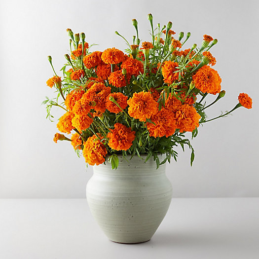 View larger image of Marigold Bouquet