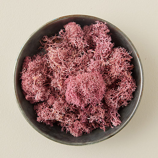 View larger image of Preserved Reindeer Moss
