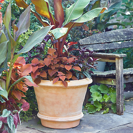 View larger image of Tapered Terracotta Planter