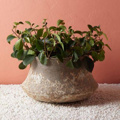 Ceramic Bell Planter