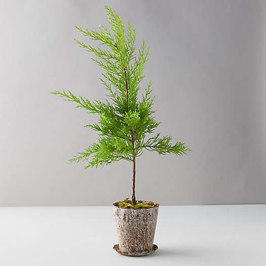 View larger image of Lemon Cypress, Distressed Metal Pot