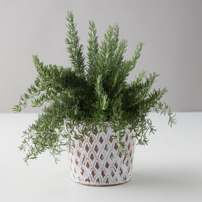 Chef's Rosemary, Distressed Metal Pot