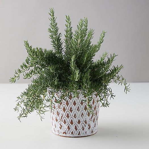 View larger image of Chef's Rosemary, Distressed Metal Pot