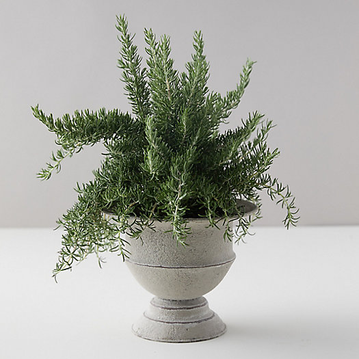 View larger image of Chefs Rosemary, Metal Urn