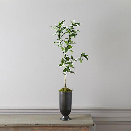 View larger image of Meyer Lemon Tree, Metal Urn