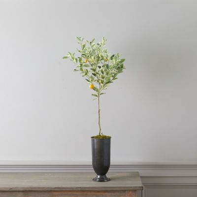 Variegated Calamondin Orange Tree, Metal Urn