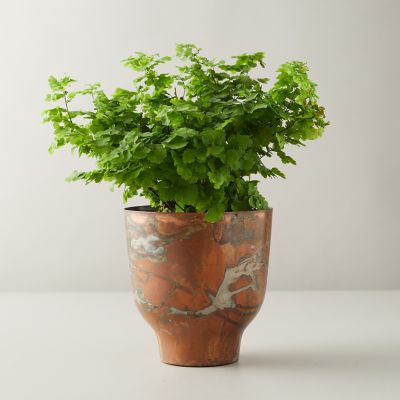 Pacific Maidenhair Fern, Copper Pot