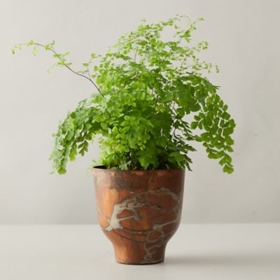 Maidenhair Fern, Copper Pot