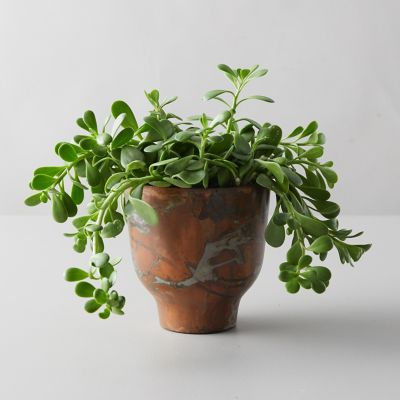 Trailing Jade, Copper Pot