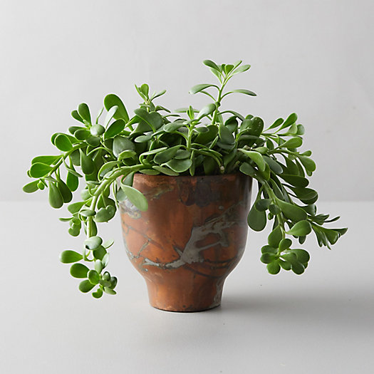 View larger image of Trailing Jade, Copper Pot