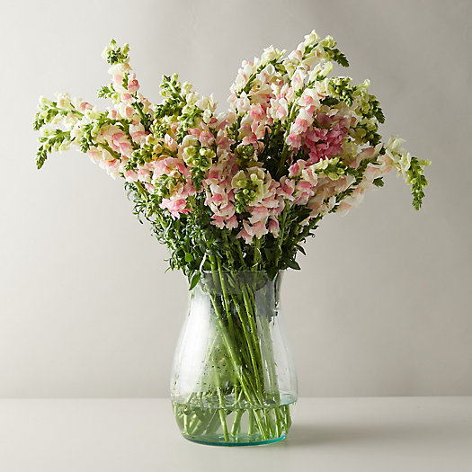 View larger image of Fresh Snapdragon Bouquet