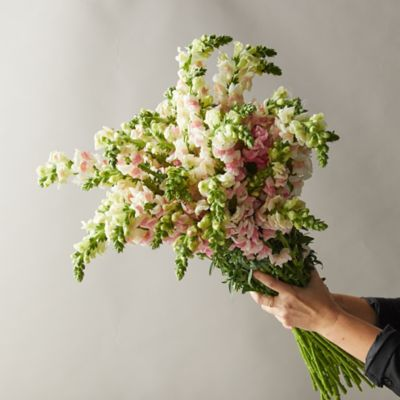 Fresh Snapdragon Bouquet