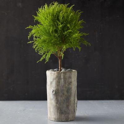 Fois Bois Tall Planter