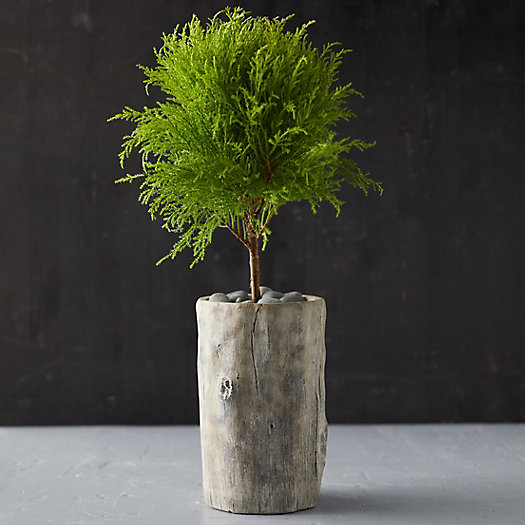 View larger image of Fois Bois Tall Planter