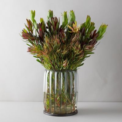 Fresh Mixed Leaucadendron Bunch