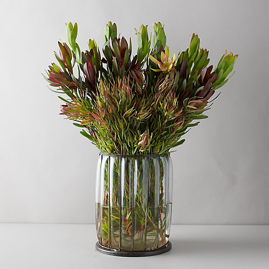 View larger image of Fresh Mixed Leaucadendron Bunch