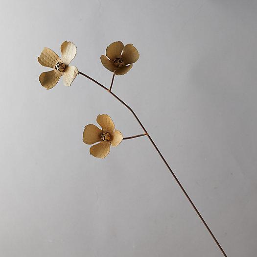 View larger image of Iron Magnolia Stem